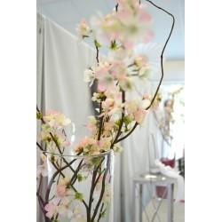 Location branche de cerisier